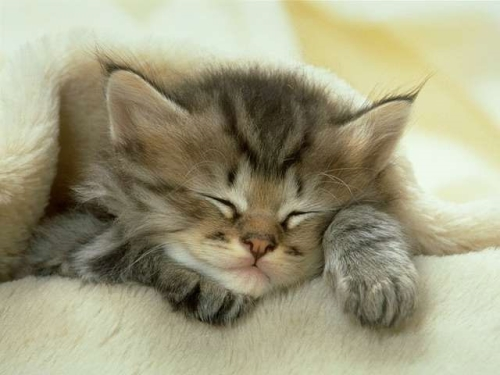 gatitos dormidos