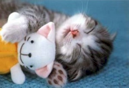 gatito Imagenes Tiernas de Gatitos Dormidos