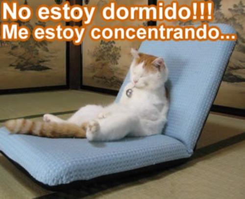 gato consentrado Imagenes Tiernas de Gatitos Dormidos
