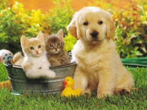 puppy1 e1362498274672 Imagenes de Amistad entre Animales