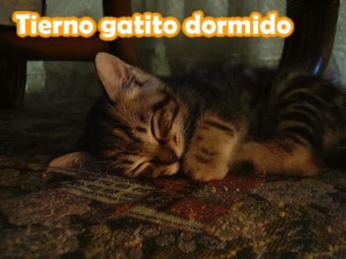 tierno gatito dormido Imagenes Tiernas de Gatitos Dormidos