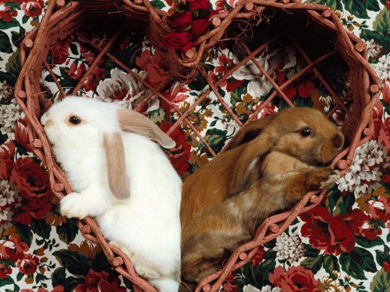 Conejitos de Pascua 800 Imágenes Lindas de Conejitos