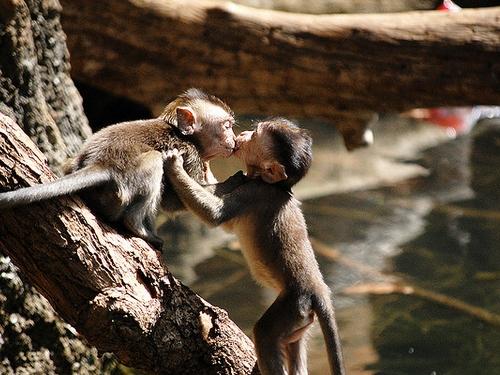 besos animales Imágenes de Besos Animales