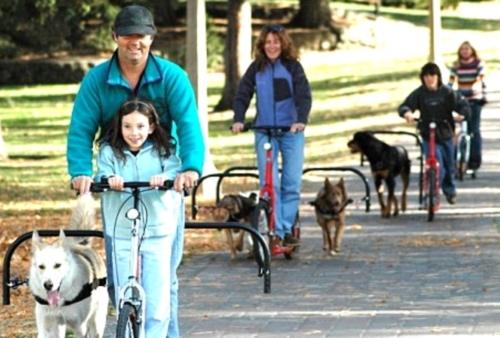 bicicleta paseador perros 6 de Abril Día Mundial de la Actividad Física