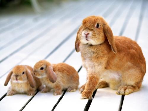 familia conejitos Imágenes Lindas de Conejitos