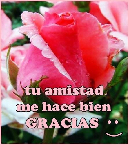 flores con frases de amistad Imágenes con Frases de Amistad para Facebook