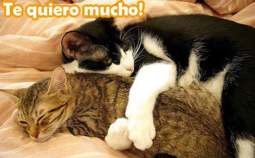 gatito amoroso Imágenes bonitas de gatitos con mensajes