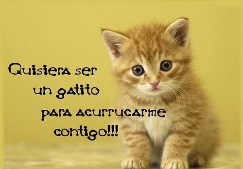 gatito Imágenes bonitas de gatitos con mensajes