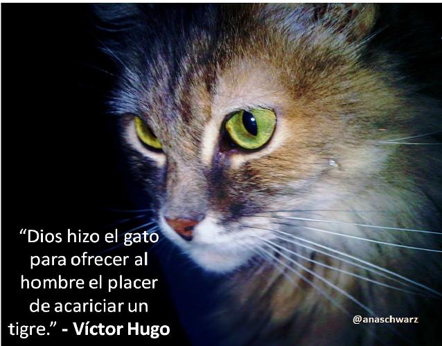 gato12 Imágenes bonitas de gatitos con mensajes