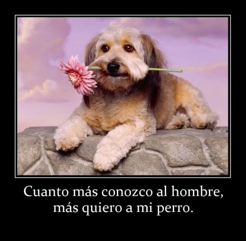 91441 cuanto mas conozco al hombre mas quiero a mi perro Cuanto más te Conozco