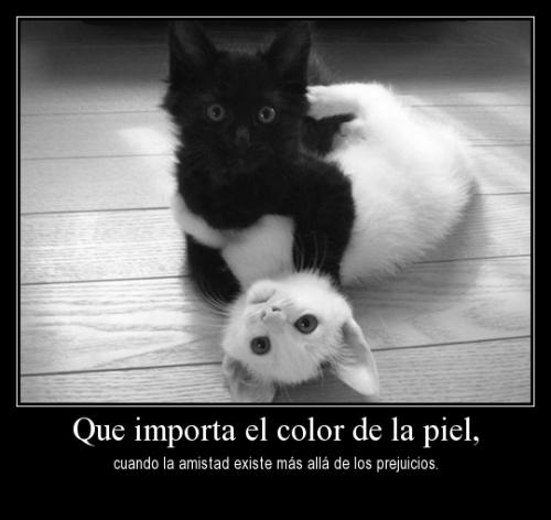 amsitad gatos Frases de Amistad para Compartir en Facebook