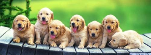 Facebook Portadas Animales Perritos Portadas de Animales Tiernos para Facebook