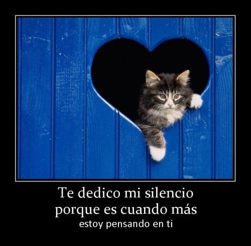 100790 te dedico mi silencio porque es cuando mas Imágenes con Gatitos para decir Estoy Pensando en Ti