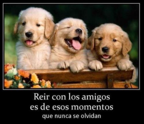 Imágenes de Animales con Frases de Amistad (Imagenes para Facebook)
