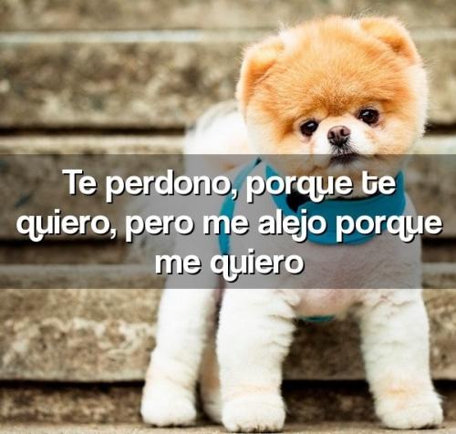 frases.joryx .com 4199 7 Te perdono, porque te quiero, pero me alejo porque me quiero