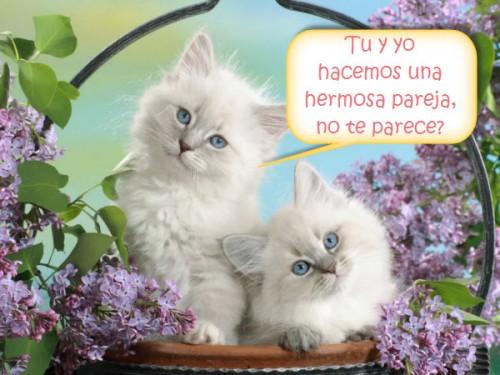 gatitos en canasta e1393276547672 Imagenes para enviar por whatsapp