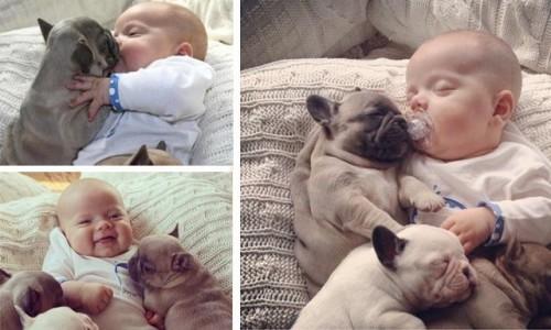 imagen bebebulldog e1391546191291 Lindos Cachorritos