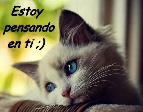 imagenes de gatitos Imagenes para enviar por whatsapp