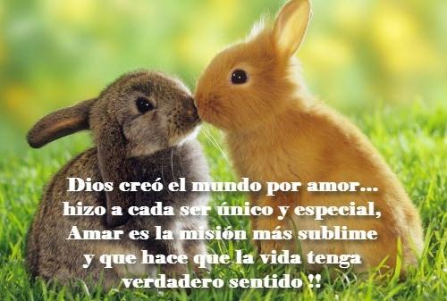 conejitos besandose 500x337 Frases romanticas de conejos