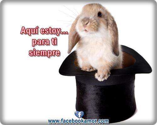 lindo conejo para facebook amistad Frases romanticas de conejos