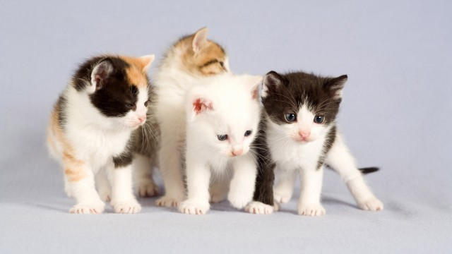 imagenes de gatos - familia