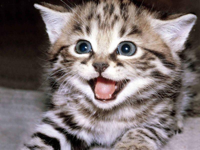 imagenes de gatos lindos