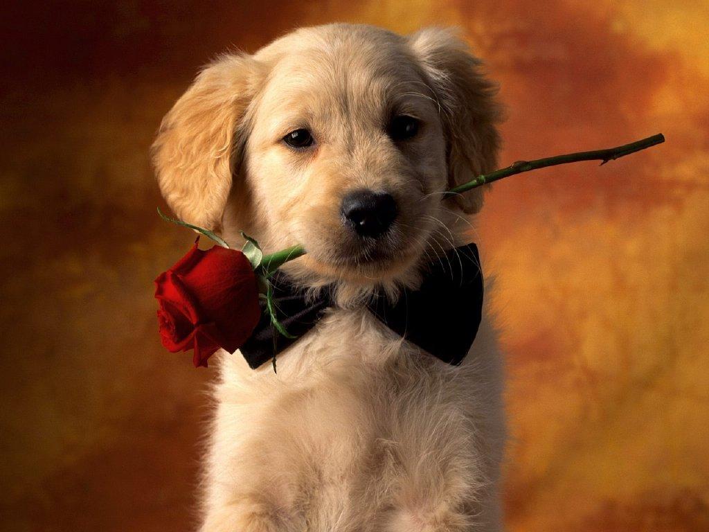 Imagen de perrito enamorado