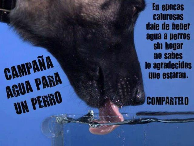 Dia internacional del animal