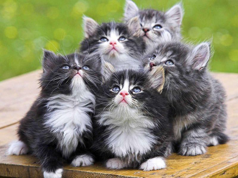 Imagenes tiernas de gatito