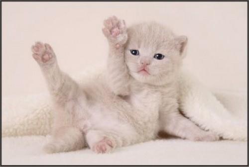 Imagenes tiernas de gatitos