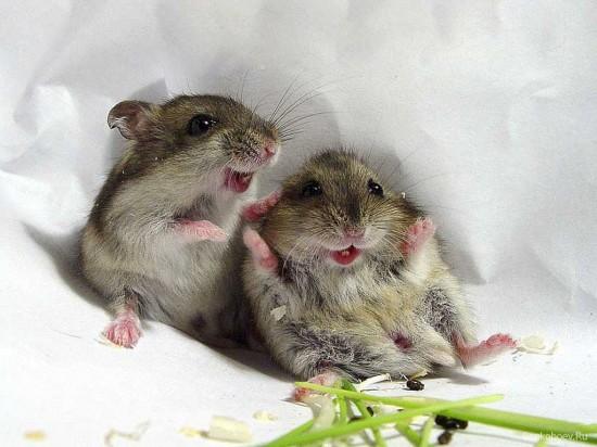 Imagenes tiernas de ratoncitos
