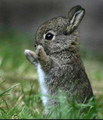 imagenes tiernas de conejito bebe
