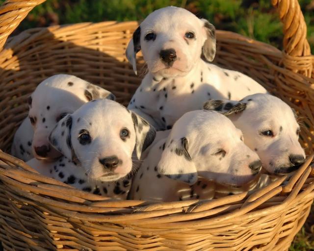Imagenen tierna de perritos hermanos