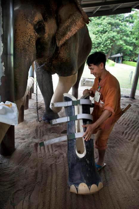 elefante ayudado por humano