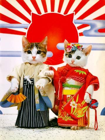 imagenes tiernas de gatos orientales