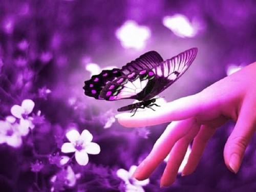 imagenes tiernas de mariposas