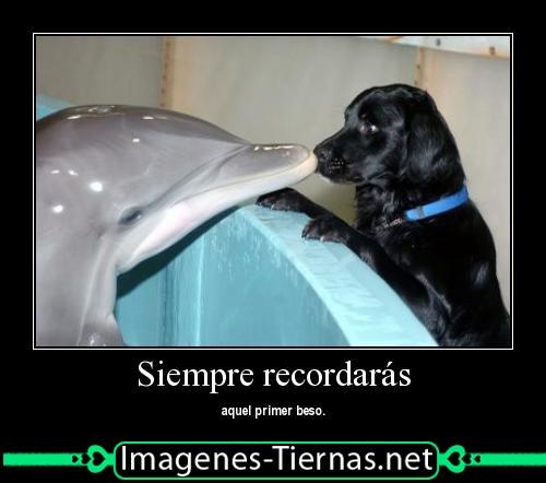 Delfin_besando_a_perro