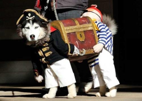 Husky Pirata