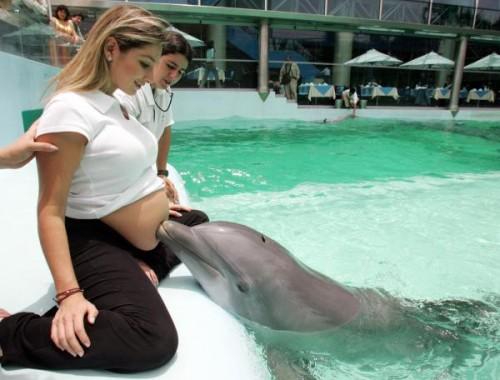 delfin-embarazada