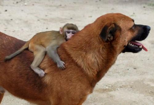 imagen de amistad animal
