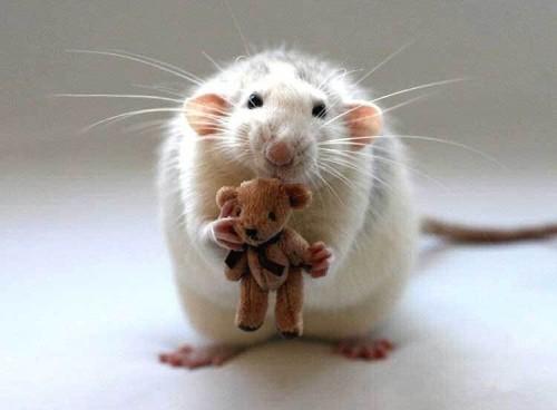 imagen tierna de ratoncito