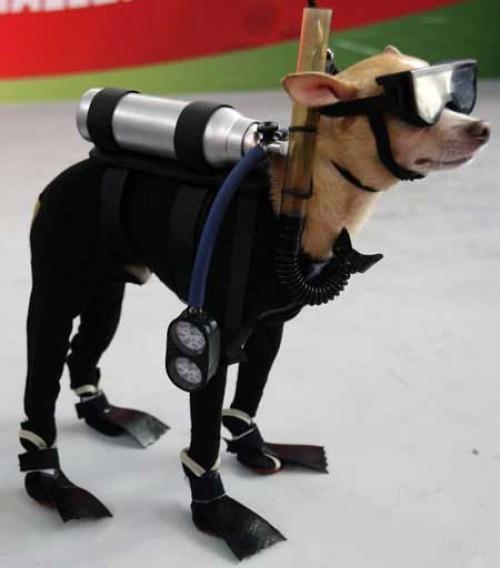 perro-disfrazado-buzo