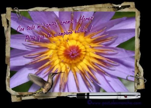 postal de flores