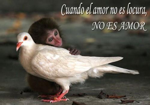 postales de amor animal