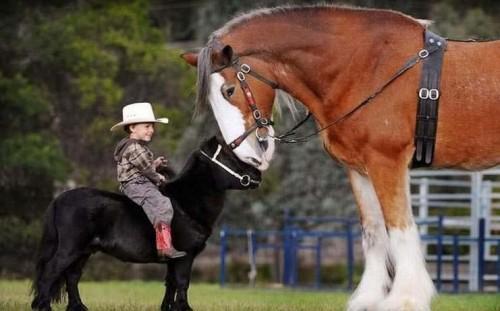 caballos increibles