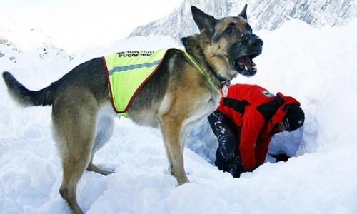 perro-rescatista