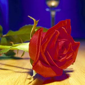 rosa-romantica