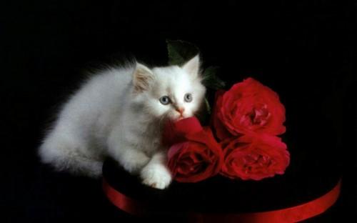 gatitos con rosas-
