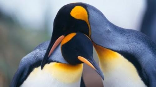 imagenes tiernas de pinguinos