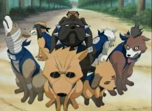 perros de Naruto